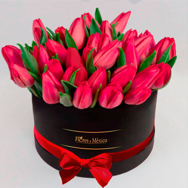 Black Box of Tulips - Mexico