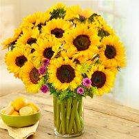 Brightening Sunflowers, Mexico