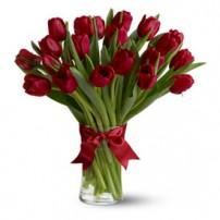Tulipanes Premium, Mexico