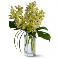 Cymbidium Orchids, Mexico