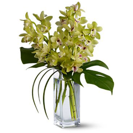 Orquídeas Cymbidium