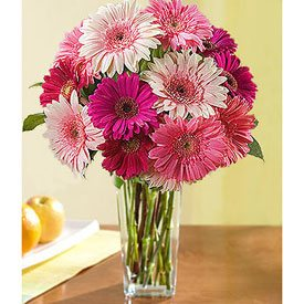 Pink Gerberas - EL BARRIAL
